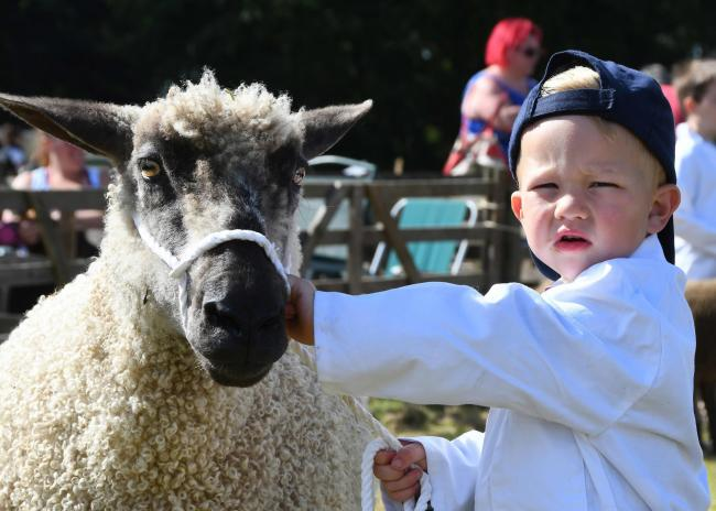 George Barker with his Teeswater sheep named April at this year's Malton Show Picture: David Harrison