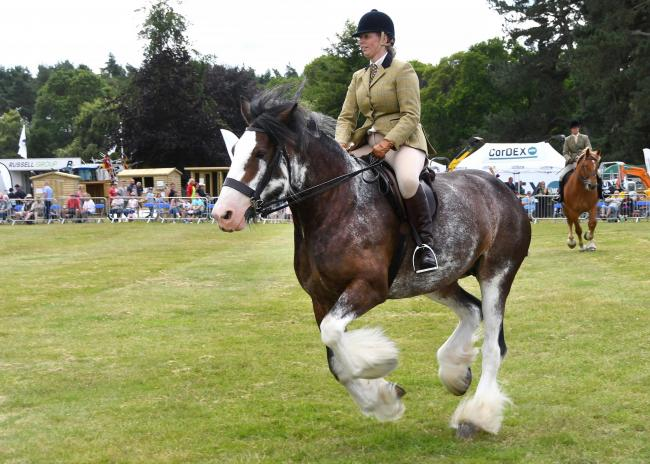 Action in one of the horse classes at Malton Show this year