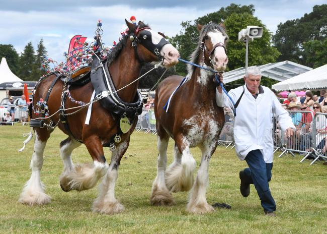 This year's Malton Show has been cancelled