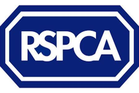 RSPCA appeal after a kitten thrown from moving car on a dual carriageway