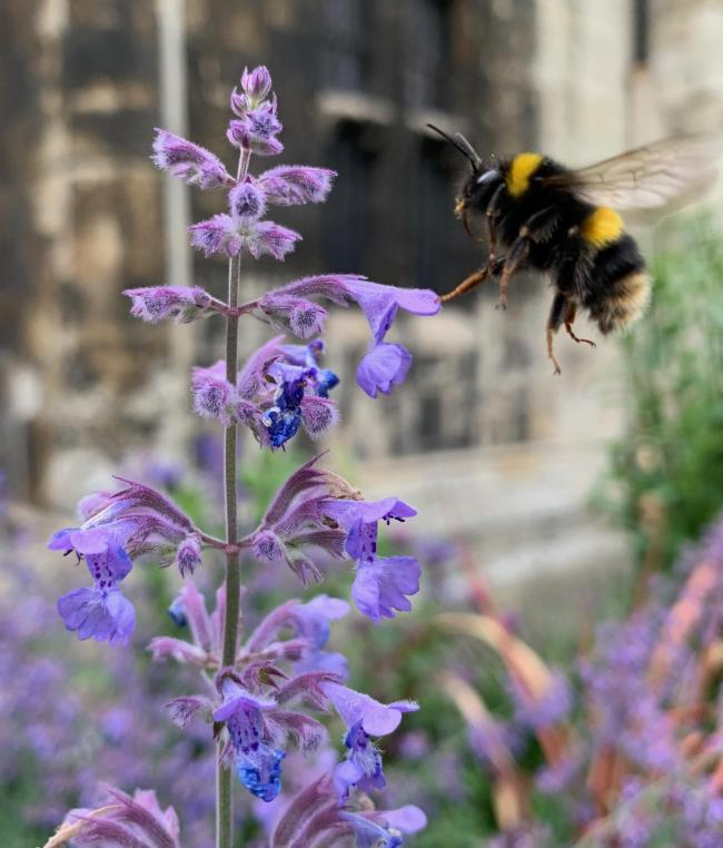 A bee outside of the York Minster Library taken by Adam Peel, Whitwell-on-the-Hill
