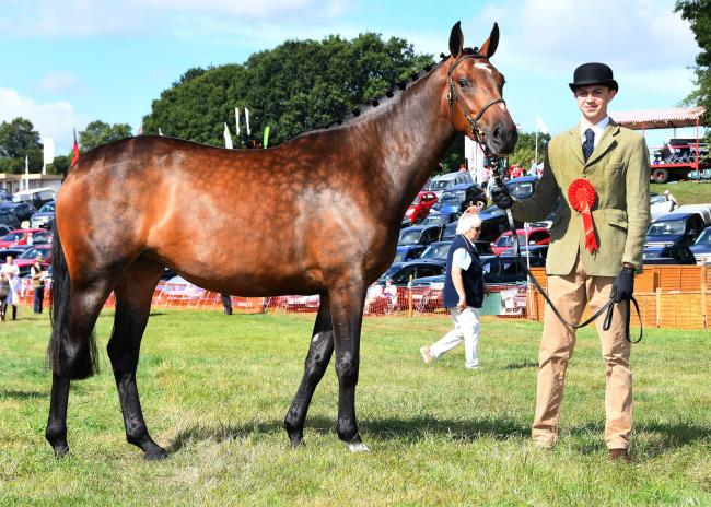 Pictured at last year's Ryedale Show is the winner in the In-hand three-year-old Hunter class, Leanne Ashburn's PLS Penny Dreadful with Marcus Bean                         Picture: David Harrison