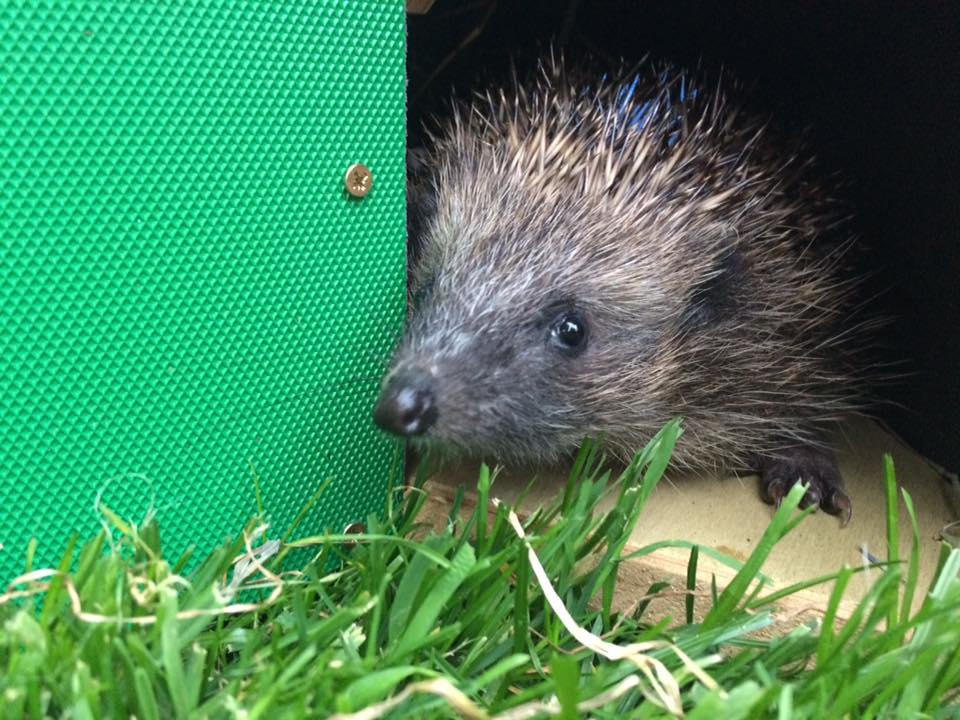 Hedgehog talk and wildlife garden safari