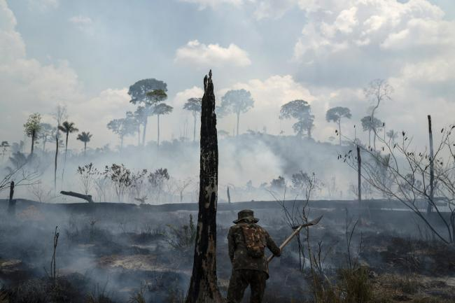 The charred landscape of the Amazon Rainforest following wildfire.