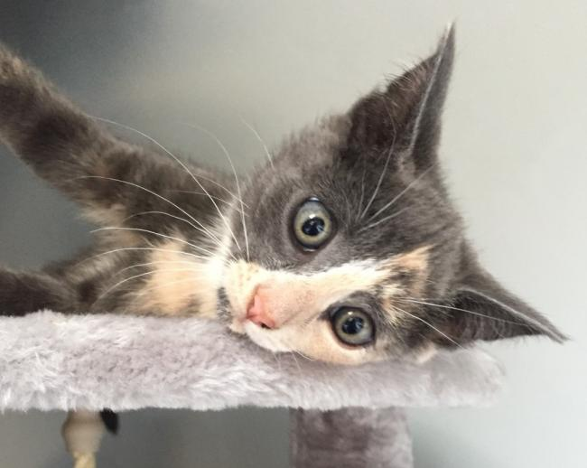 Pebble, the kitten, who was fatally shot with an air rifle