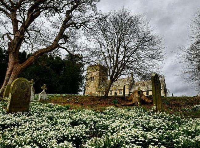 Snowdrops at St Matthew's Church in Hutton Buscel Picture: Dr Lucy Hobkinson