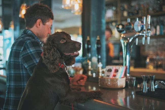 Benchmark Kennels has compiled a top five dog-friendly pubs in Yorkshire