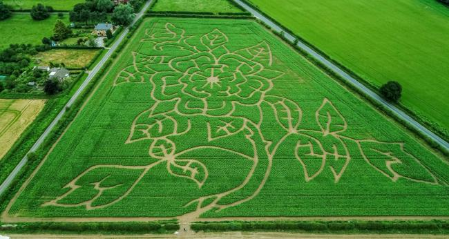 The new Great Yorkshire Maze will open in Sherburn from next Wednesday after restrictions were eased         