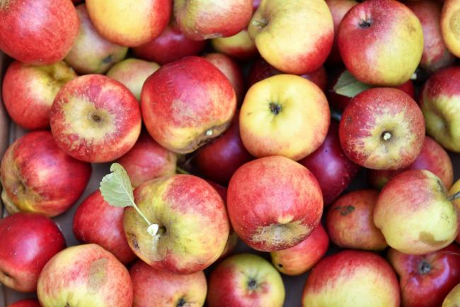 Autumn is now upon us and is serving up many delights, including apples from many local orchards