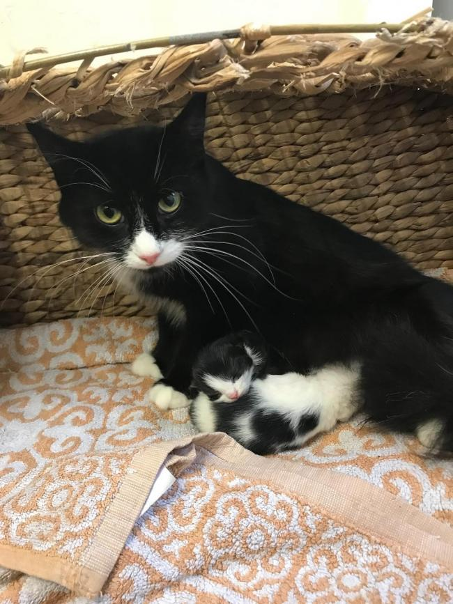 Mum cat found abandoned in bin bag with newborn kittens