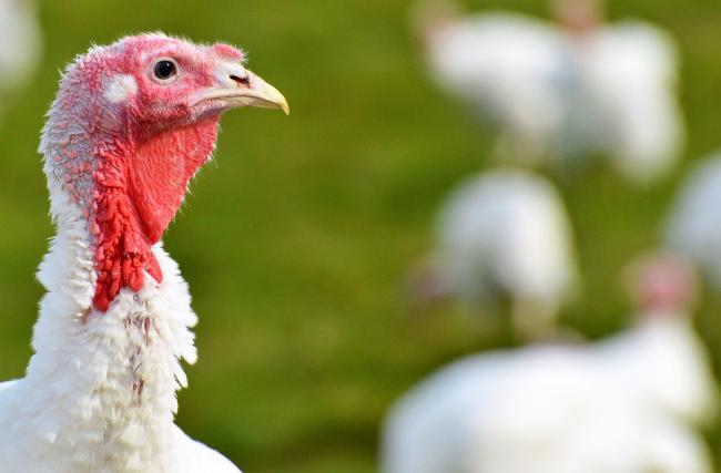 A bird flu outbreak has been confirmed on a Northallerton farm   Picture: Pixabay