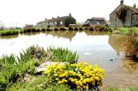 The duck pond at the heart of the picturesque Newton-upon-Rawcliffe