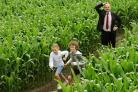 Reporter Richard Catton is left puzzling, as  youngsters Tom and Jess Jones race ahead of him, at Easingwold Maize Maze