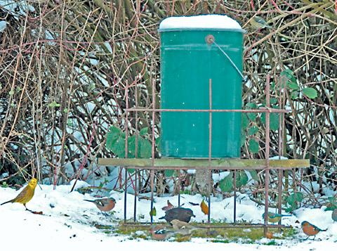 Paying farmers to feed their farmland birds using pheasant feed hoppers could become an option in stewardship schemes