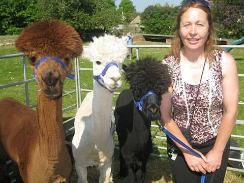 Jackie Barlow, Alpaca breeder with some of her lovable animals