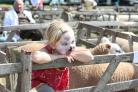 Millie Smith, aged six, whose grandparents showed their Suffolk sheep at Malton Show