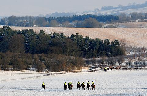 Racehorses head for the gallops outside Malton for a snowy ride-out