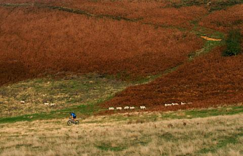 Bracken on the North York Moors