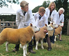 Winning sheep at last year's Thornton-le-Dale Show