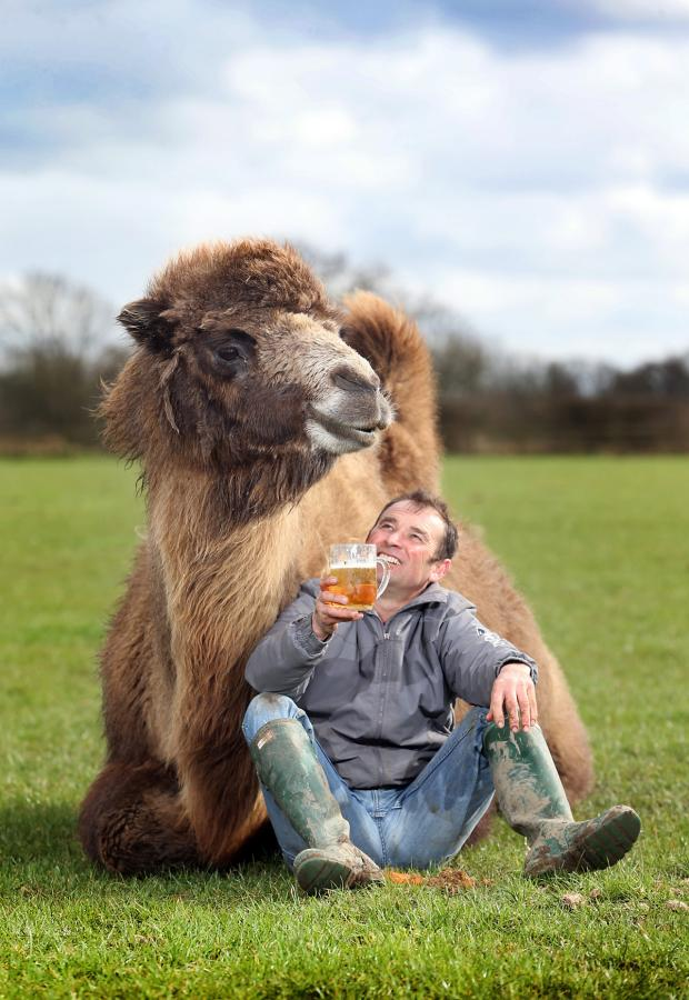 Gazette & Herald: Simon Griffiths offers beer-loving Jeffrey the camel a well-earned pint