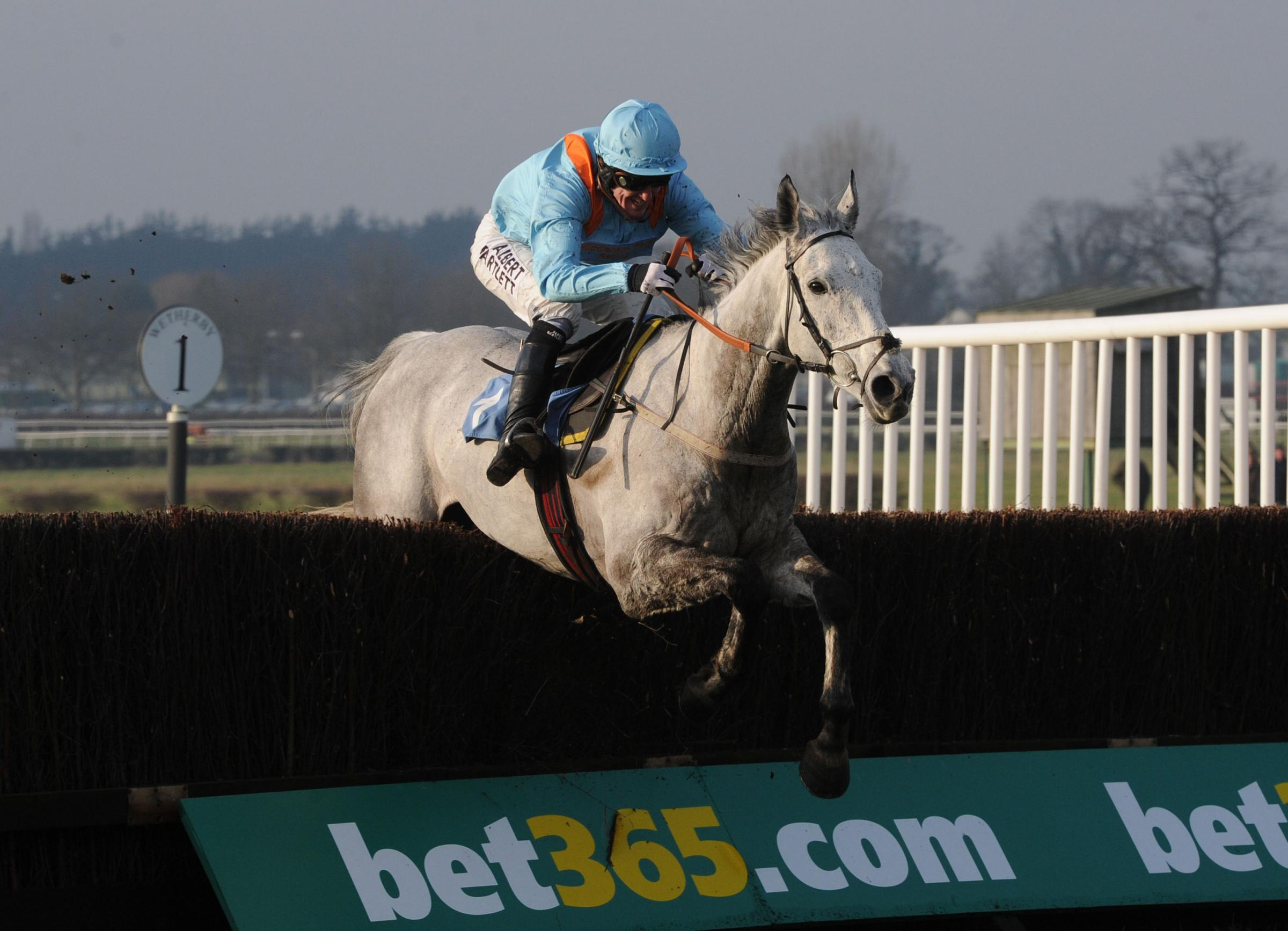 Rose of the Moon at Wetherby