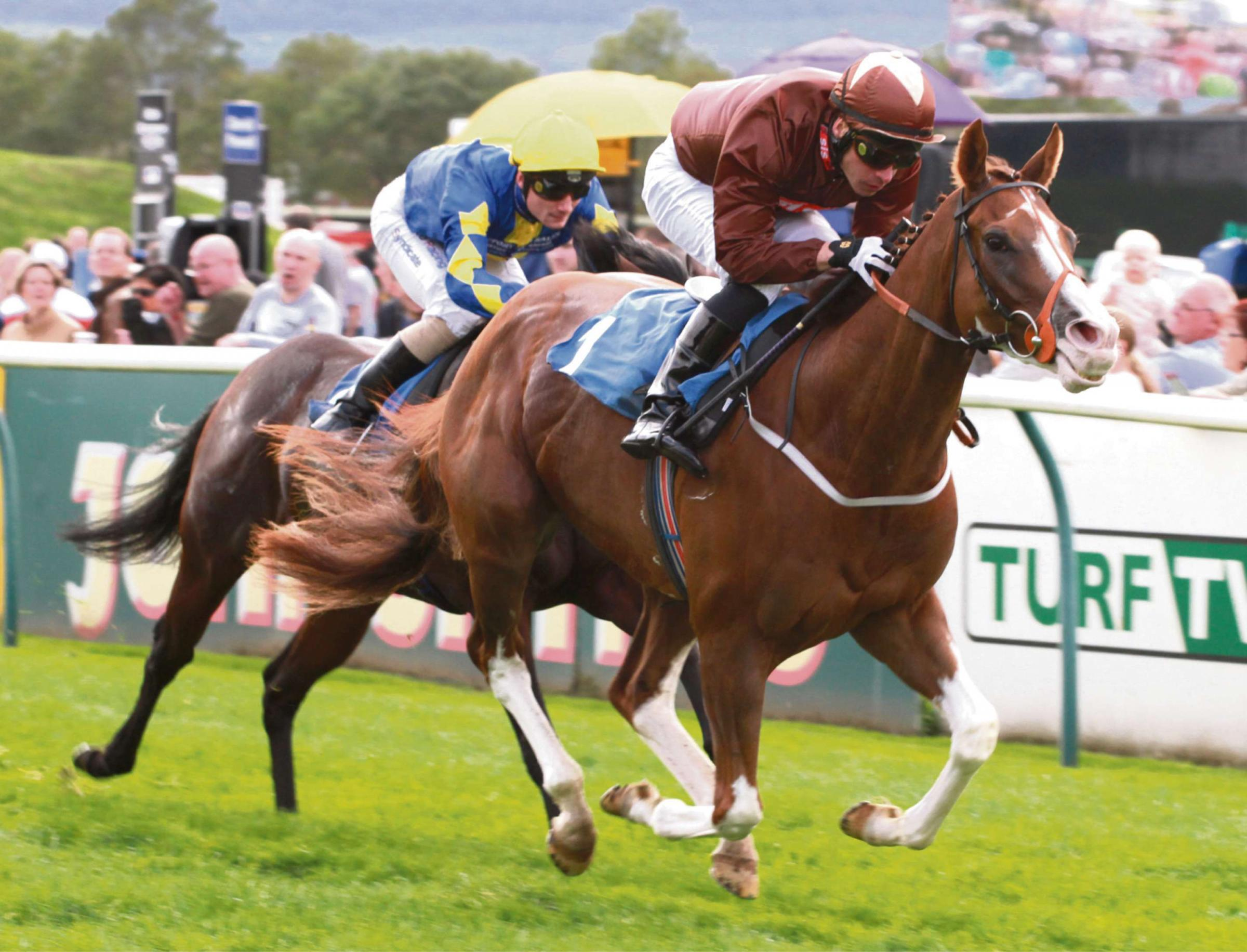 Top Notch Tonto spearheads fine Ryedale challenge on Sandown showpiece