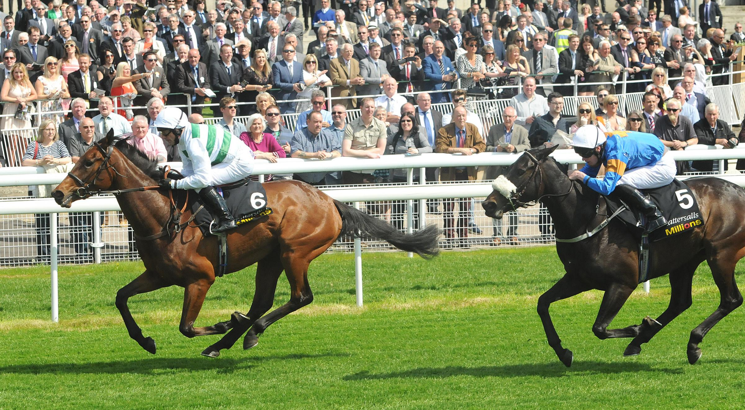 Lily aiming to Rule at Epsom