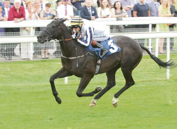 Paul Midgley's Line Of Reason, who goes for York's Skybet Dash on Saturday bidding for a fourth straight win