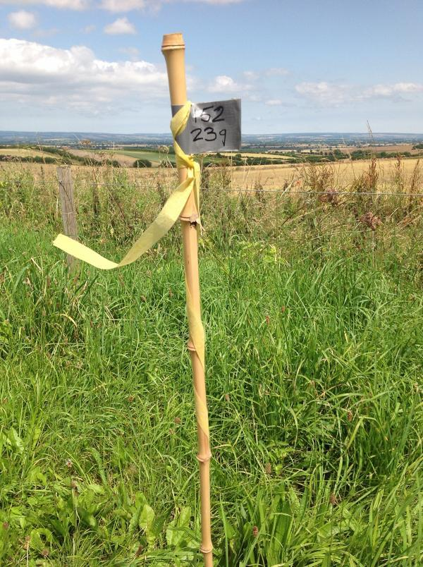 A marker on a grass verge in Ryedale