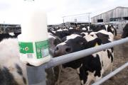 Talks are taking place between the NFU and First Milk after the co-operative announced that it is delaying the next milk payment by two weeks