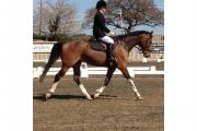 Rachel Blueman and Ruben, who competed in the last winter series dressage