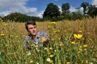 "Richard Bowman admires the newly sown ""weeds"" Corn Marigold and Mayweed at Ryedale Folk Museum Pic : Nigel Holland"