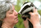 Jean Thorpe with Jill, the badger cub she has rescued