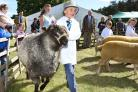 Judging in the young sheep handlers section at Malton Show    Picture: David Harrison