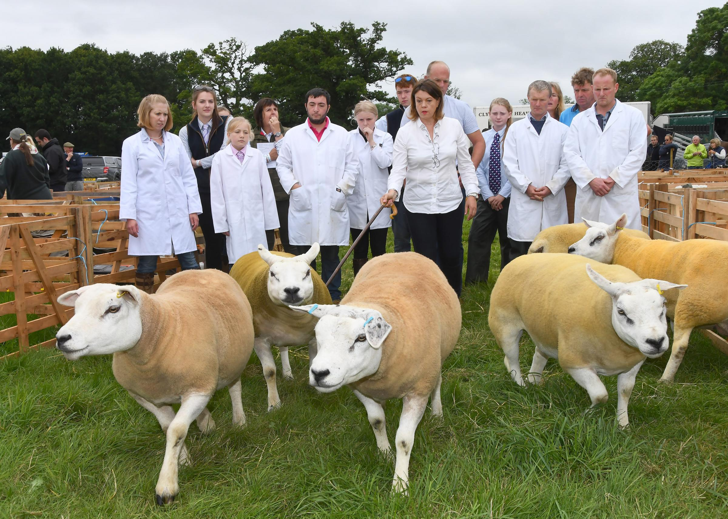 Ryedale Show pictured last year