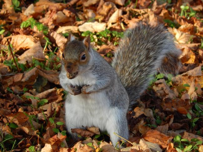 Nick Fletcher's picture of a squirrel in York Museum's Gardens