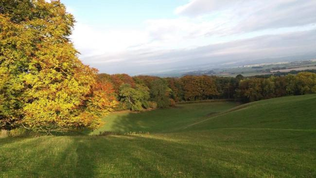 Autumnal colours above West Heslerton by Janet Wilkinson