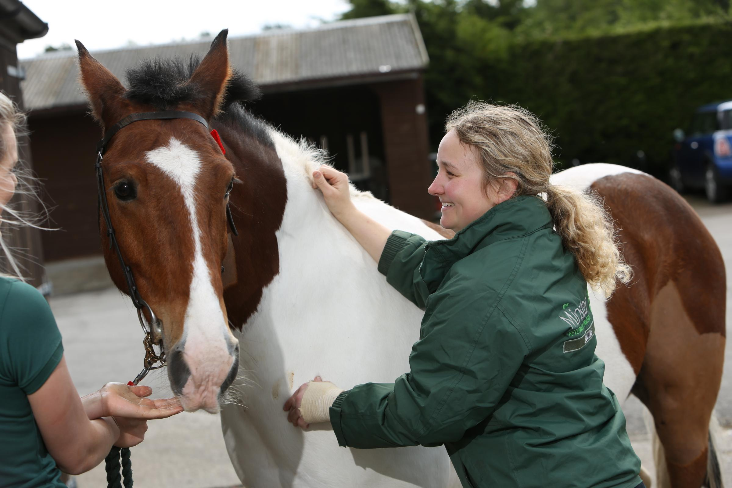 Minster Equine Clinic vet Katie Brickman injecting horse against equine flu, which has led to a  six-day shutdown of racing