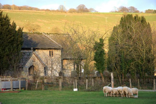 Sheep graze peacefully near the church in Ellerburn   Picture: Sue Cuthbert.