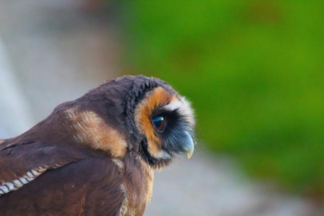 William Hepworth took this picture at the Bird of Prey Centre at Duncombe Park.